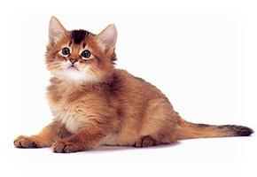 Pet Insurance Spain 2